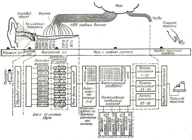 Структурная схема человека